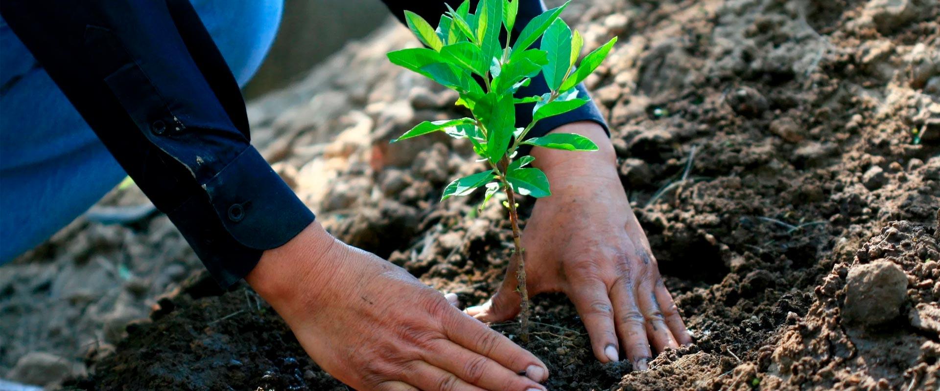 Respeto medioambiental